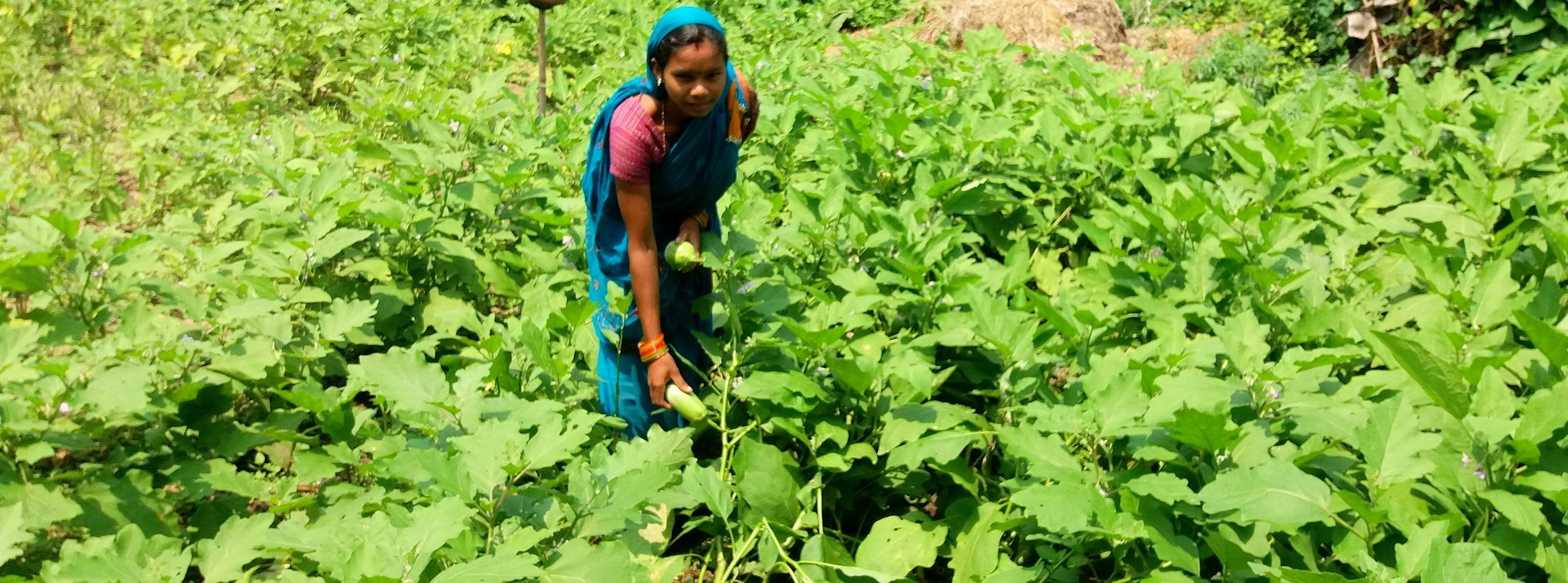 Promoting Nutritional Garden