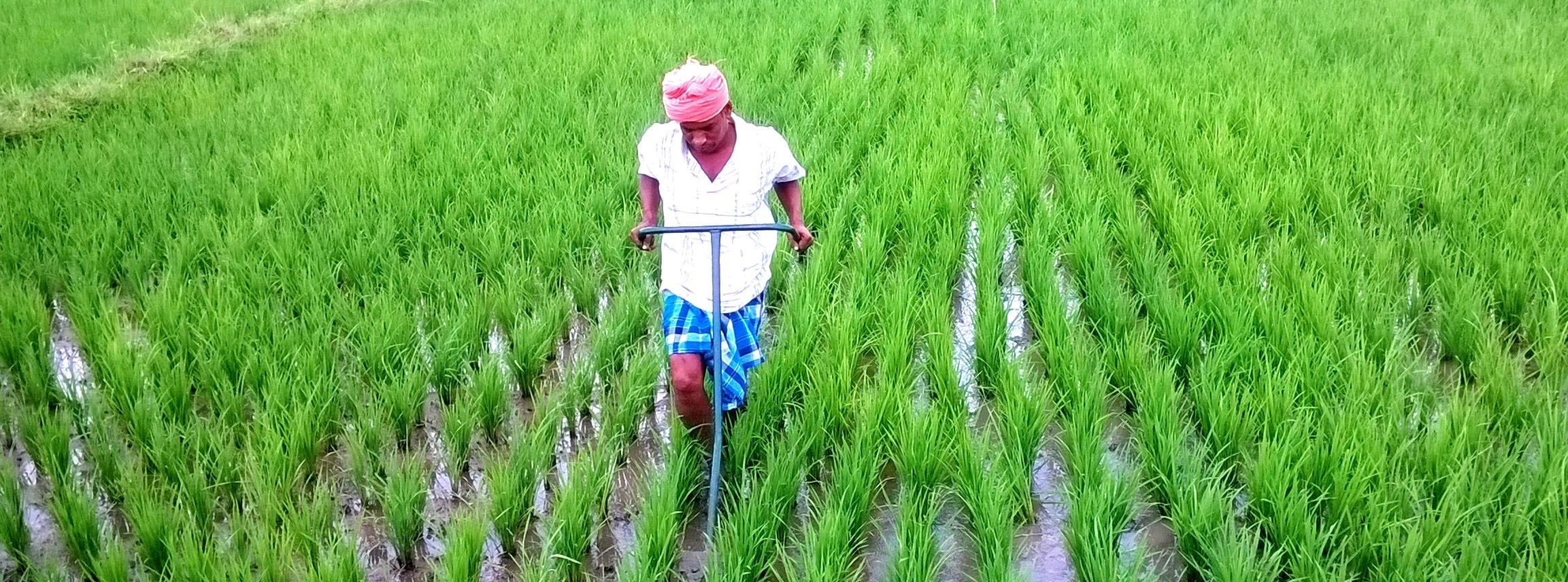 Enhancing Agricultural Production